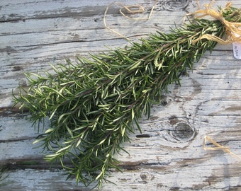 "Rare Extra long ROSEMARY Skewers Organic ten 12"" sprigs / Great for Wedding Bouquet / Country Wedding Bouquet / LIMITED"