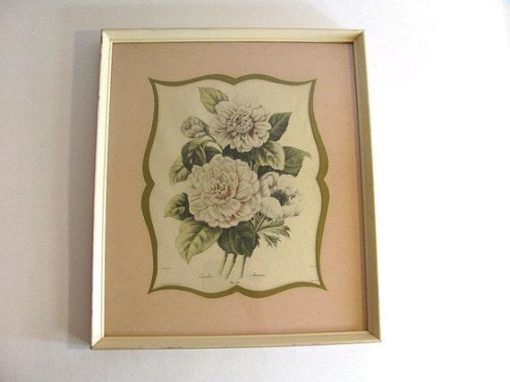 Vintage botanical glass framed picture of pale pink flowers / floral pink carnations illustration // framed with glass