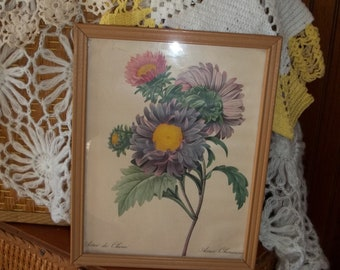 Vintage Flower Print  Chinese Aster framed