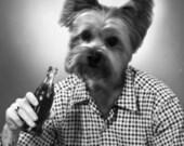 Custom Soda Drinker - 1 5x7 - JPG FILE - One Personalized Pet Portrait
