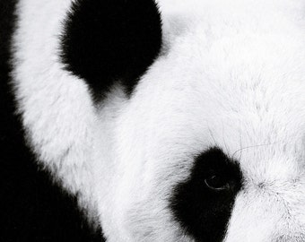 The Panda 2 - black and white Window To The Soul of A Lovely panda bamboo Nature decor zoo travel gift idea black and white photography