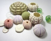 Beach Decor Sea Urchin Shells -  Nautical Decor Seashell Urchins,  10PC Assortment