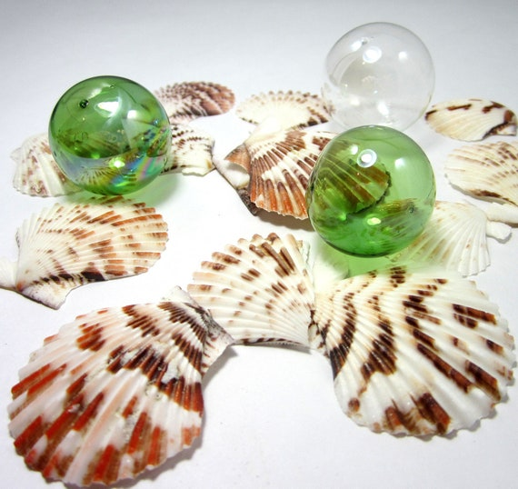 Beach Decor Seashells - Scallop Shells for Nautical Decor, Beach Weddings or Crafts, 24pc