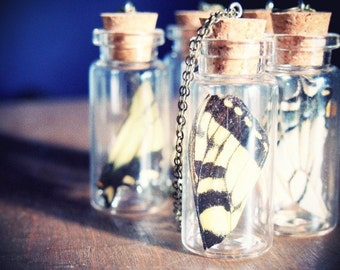 """Miniature Cabinet of Curiosity Necklace """"Butterfly Wing"""" Insect Taxidermy Elegant Woodland Jewelry"""