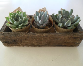 Succulent Centerpiece, Great For Rustic Weddings, Cocktail Parties, Barn Weddings, Special Events, Housewarming Gift, Rustic Box