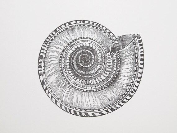 Solarium Shell Letterpress Art Print - Spiral Pattern Shell