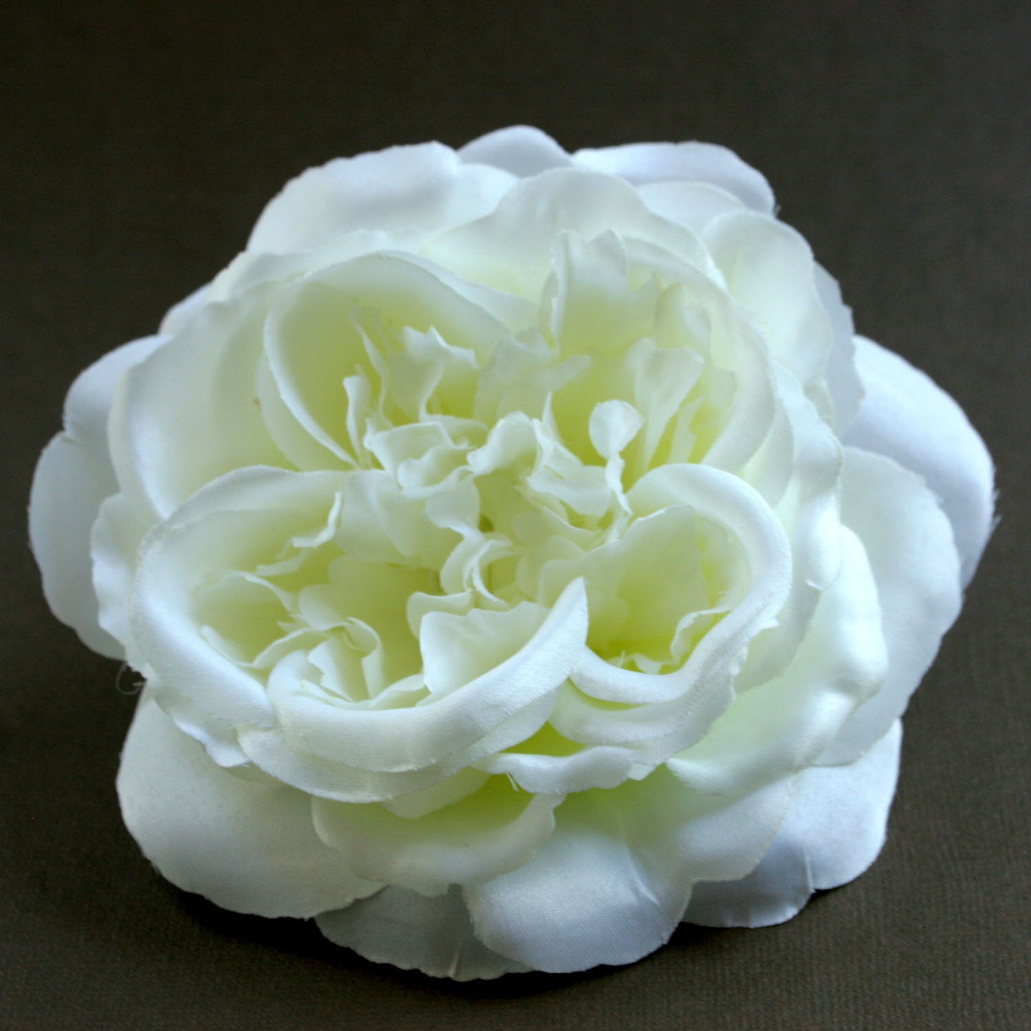 how to grow cabbage roses