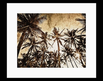 Coconut Palm 8X10 Fine Art  Print