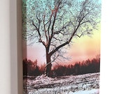 Winter Star Tree...16x20 gallery wrap canvas / fine art giclee print/ psychedelic nature photograph