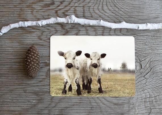 Animal Photography Cow Photography Twin Calves Card Set (5)