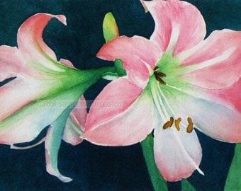 pink amaryllis print of original watercolor