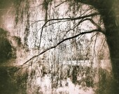 Weeping Willow Tree Print  Nature Photograph Surreal Moody Tree 8x10