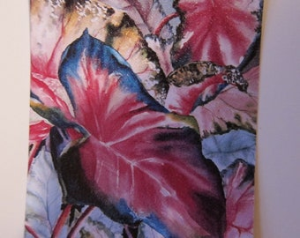 Caladium II - watercolor print ACEO 348, Red Green collectible, Art card watercolorsNmore