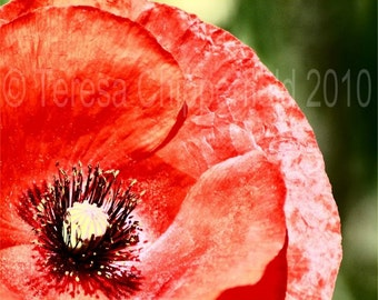 Flower Photography, Red Poppy Print, Portland Oregon, Fine Art Floral Photo, Kitchen Garden Wall Art, Bright Home Decor, 8x10,11x14,16x24