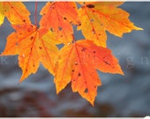 Fall Leaves, Fine Art Photography, Autumn, Indian Summer, colorful,orange leaves, green, red, blue, water, home decoration, interior design