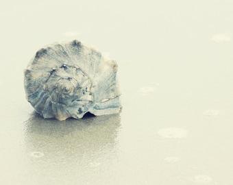 coastal art seashell photography nautical decor beach decor ocean decor seashell prints sea shell pictures coastal wall art nautical art