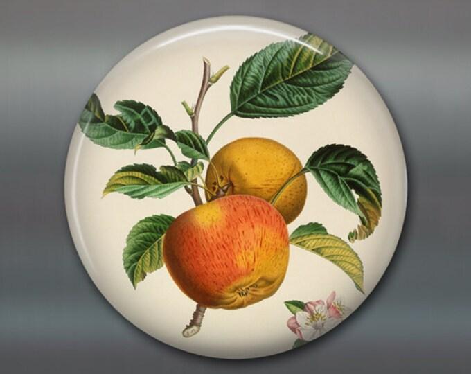 """3.5"""" kitchen magnet with vintage apple illustration - kitchen decor vintage illustration - round magnet with image of fruit - MA-702"""