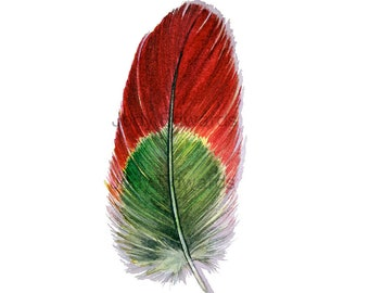 Parrot Feather Watercolor - Red and Green Macaw Feather Study 484
