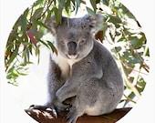 Kids Wall Decor, Decal, Koala, Conservation, Nursery Art, Gumtree, Gunmetal Grey - Smiley