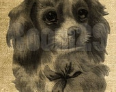 INSTANT DOWNLOAD - Cute Dog Vintage Illustration - Download and Print - Image Transfer - Digital Sheet by Room29 - Sheet no. 996