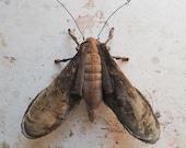 Soft sculpture moth. Unique textile art.