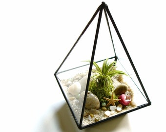 Glass Terrarium, Air Plant Terrarium Kit with Shells, Desk Accessory