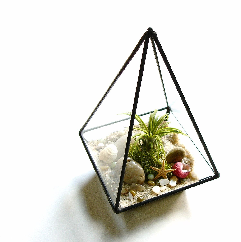 Glass Terrarium, Air Plant Terrarium Kit with Shells, Desk Accessory ...