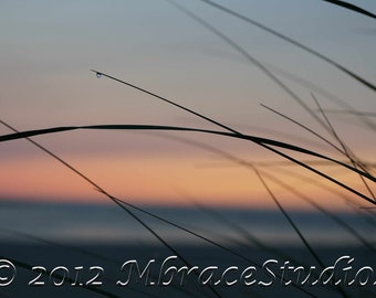 Soothing Dune Grass Ocean Sunrise Closeup Photograph - 5 x 7 Framed Macro photo sunrise silhouette