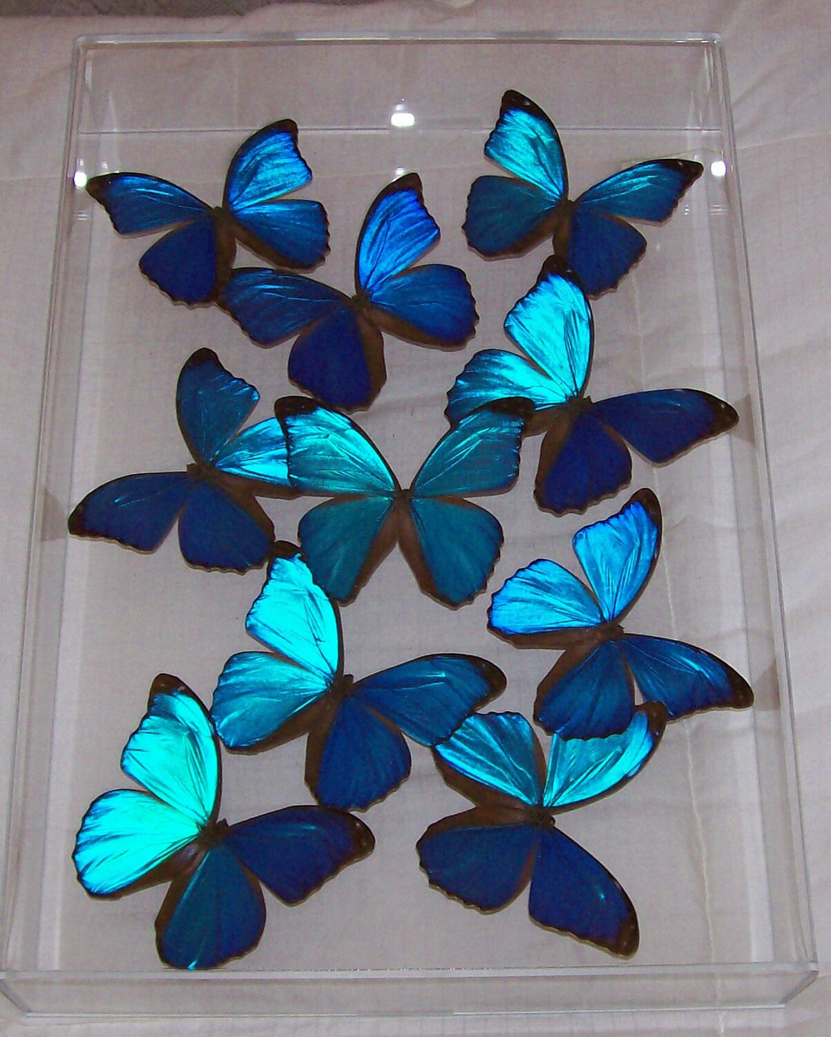 Swarm Of Butterflies Tumblr The gallery for -->...
