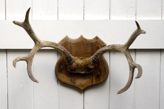 Vintage Antler Mount on Shield Plaque Rustic