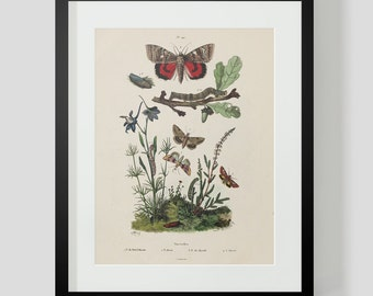 Butterfly Plate 410