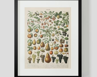 Vintage French Print of Fruits 1