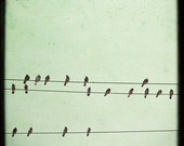 Birds On A Wire Photograph, Aviary Photography, Dreamy Vintage Inspired, Home Decor, Mint Green and Black,  Fine Art Photography 8x8