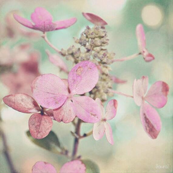"Pink Flower Photography - Dried Hydrangea - Nature Photo- Baby Nursery - Home Decor 4x6, 5x5, 5x7 -Fine Art  Photo - ""Blush"""