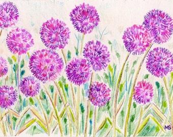 Allium Garden - Flower Art Print - Colored Pencil Ink Drawing Print - Purple Flower Art - Kitchen Art Decor