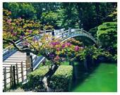 Japanese Tea Garden Bridge - Japan photography - koi fish, home/office decor, travel photo - 8x10 Original Fine Art Photograph