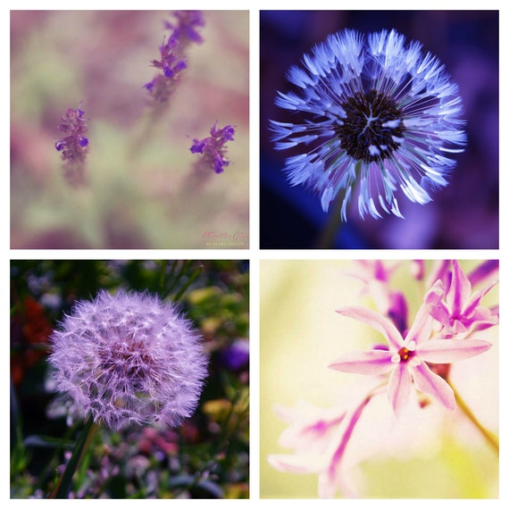 Complementary Flower Photo Collection- Fine Art Photography- Four 5x5 photo prints- Alana Gillett- Violet Amethyst Yellow Home Decor