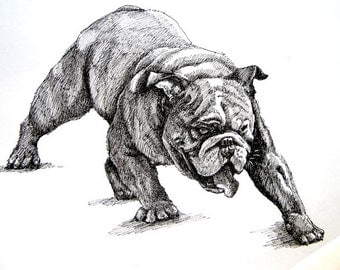 Fighting Bulldog 11x 8.5 pen drawing print from original,  birthday gift / holiday gift or various cards