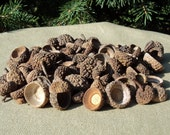 Acorn Caps: Medium to Small Size / Arts and Craft Supplies / Jewelry Supplies / Natural / Nature / Acorn