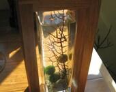 Marimo Shadowbox Terrarium by Midnight Blossom - Super Hip Underwater Terrarium with Live Japanese Moss Balls
