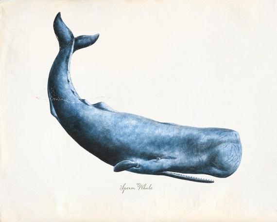 Vintage Sperm Whale Print 8x10 P230