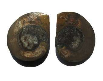 Matched Pair of Ammonite Halves