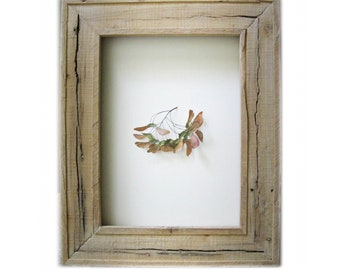 Euaggelion ---maple pods framed in weathered pine