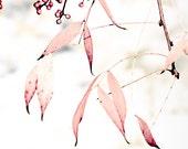 Soft Autumn Pink Leaves - 10 x 10 fine art photographic print