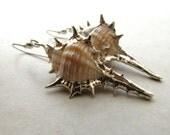 Sea Shell Seashell Earrings Shell Ocean Beach Sea BellinaCreations Bellina Creation