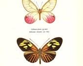 BUTTERFLY PRINT Art Original 1965 Book Plate 42 Beautiful Cramer and Staudiger Butterflies Pink Golden Orange Yellow Garden Nature
