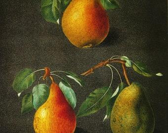 PEAR PRINT Color Art Print Original 2002 Book Plate 173 Beautiful Pears Antique Writing Garden Tree Nature Home Decor