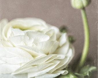 White Flower Print or Canvas Art, Flower Photography, Nature Photography, Cottage Decor, Bathroom Decor, Bedroom Decor, Floral, Cream.