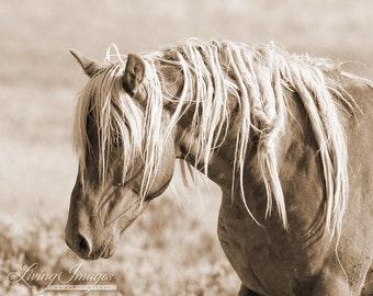 Wild Mane II - Fine Art Wild Horse Photograph - Wild Horse - Sepia