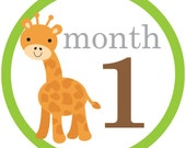 Unisex baby monthly iron on or sticker decal transfers jungle animals giraffe elephant zebra lion monkey